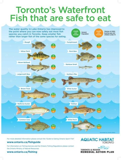 Fishes in Lake Ontario that are safe to eat